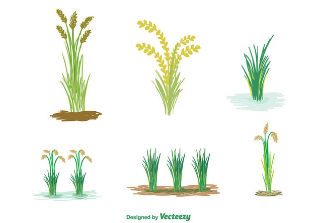 Free Rice Plant Vector - Free vector #350725