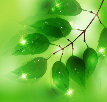 Green Leaves Sun Lights Background - бесплатный vector #351065