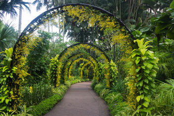 At Singapore Botanic Gardens - Free image #351195