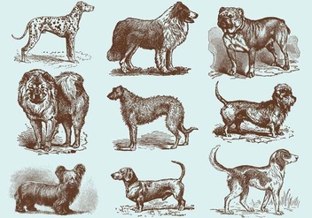 Old Style Drawing Dog Vectors - vector gratuit #352235