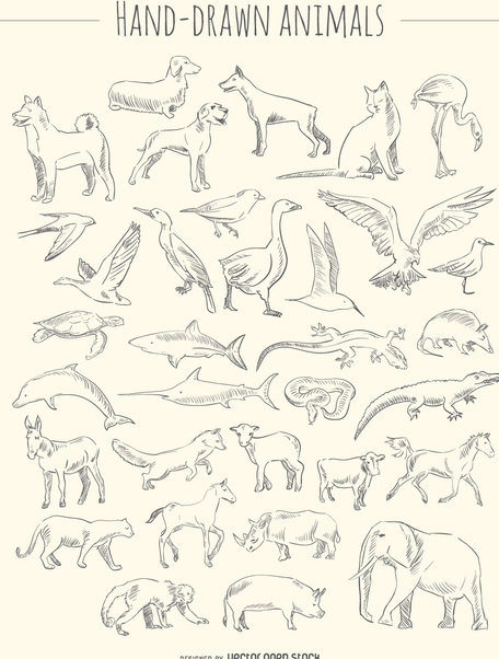 Hand-drawn animals set - vector gratuit #356445