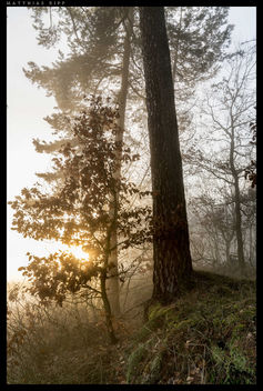 Forest light - image #356935 gratis