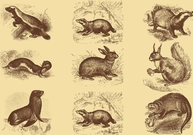 Old Style Drawing Mammal Vectors - vector gratuit #357565