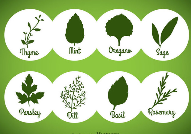 Herbs And Spices Green Icons Vector - vector #357815 gratis