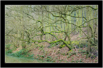 Tangled Green - image #358505 gratis