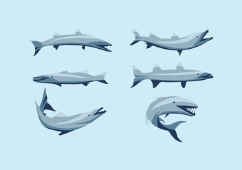 FREE BARRACUDA VECTOR - Free vector #359845