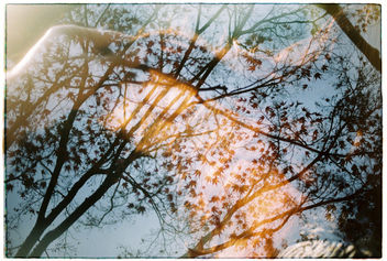 Film #swap with Amy Chu - image gratuit #360745
