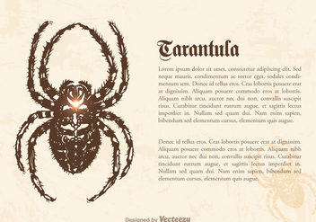 Free Tarantula Vector Illustration - Free vector #364575