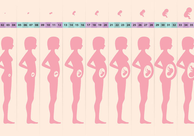 Pregnant Cycle - vector gratuit #364935