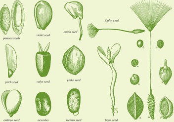 Old Drawing Seeds - vector gratuit #367275