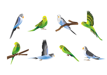 BUDGIE VECTOR - Free vector #368225