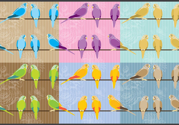 Budgie Bird Vector Backgrounds - Free vector #368265