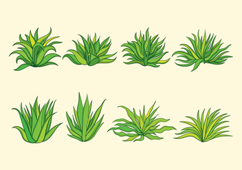 Maguey Plant - Free vector #368655