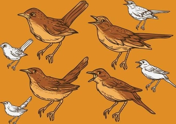 Nightingale Vector Set Illustration - Free vector #374215