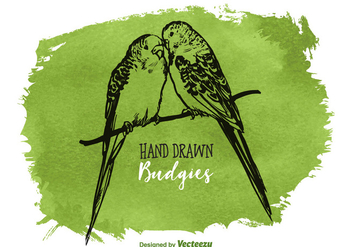 Free Vector Drawn Budgies - vector gratuit #378045