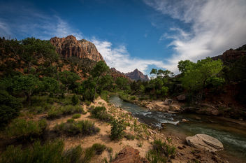 the forgotten nature (Zion NP USA) - Free image #379855