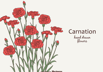 Free Vector Carnation Flowers - бесплатный vector #380895