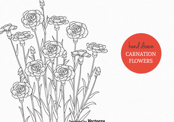 Free Carnation Flowers Vector Illustration - Free vector #380945