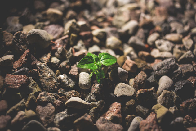 Plant growing between the rocks - бесплатный image #381085