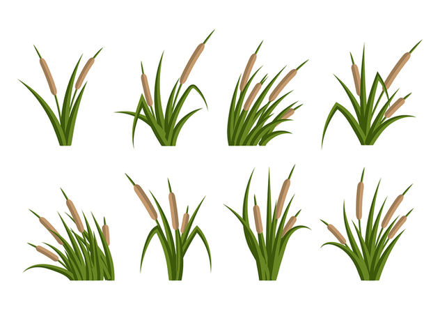 Cattails Vector Flat - Free vector #383545