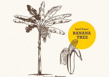 Free Vector Hand Drawn Banana Tree - Kostenloses vector #383945