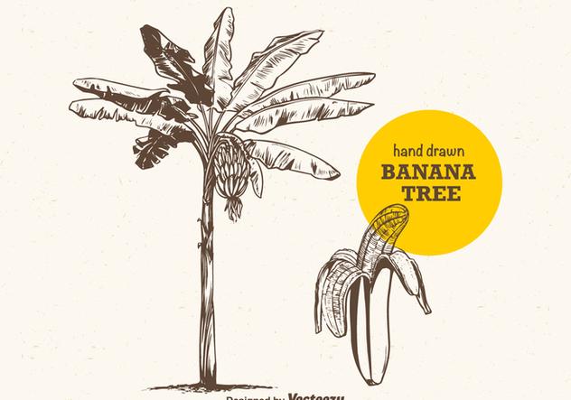 Free Vector Hand Drawn Banana Tree Free Vector Download 383945