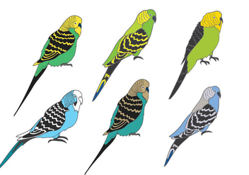 Budgie Vector - Free vector #384435