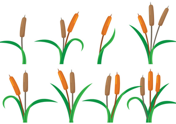 Cattails Vector - vector #387235 gratis