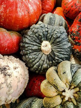 Gourds - Free image #388675