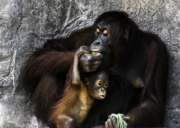 Mother and Child Share a Meal - Kostenloses image #389805