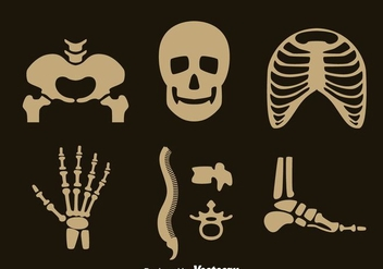 Human Skeleton Vector Set - vector gratuit #390165