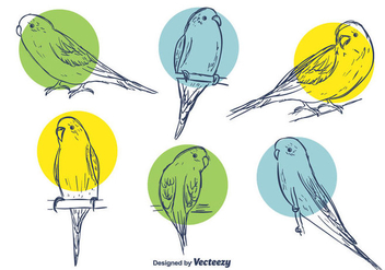 Budgie Vector Set - бесплатный vector #391665