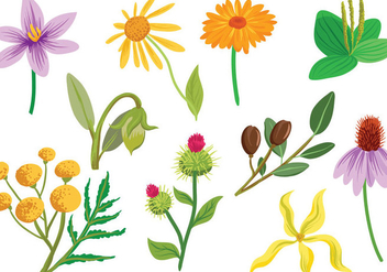 Free Cosmetic Plants Vectors - бесплатный vector #392555