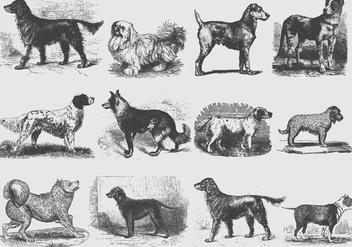 Vintage Gray Dog Illustrations - vector gratuit #395335