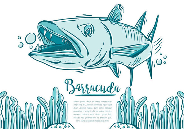Free Barracuda Fish - Kostenloses vector #395465