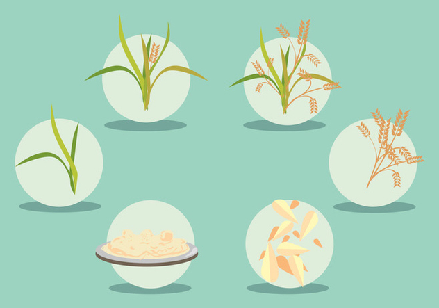 Rice Field Vector Set - Free vector #397025