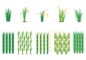 Farming Rice Field Vector - бесплатный vector #397465