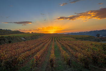 Vineyard sunset - image #397585 gratis