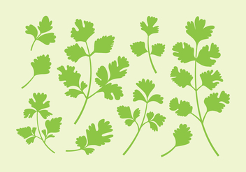 Parsley Or Cilantro Vectors - Free vector #398505