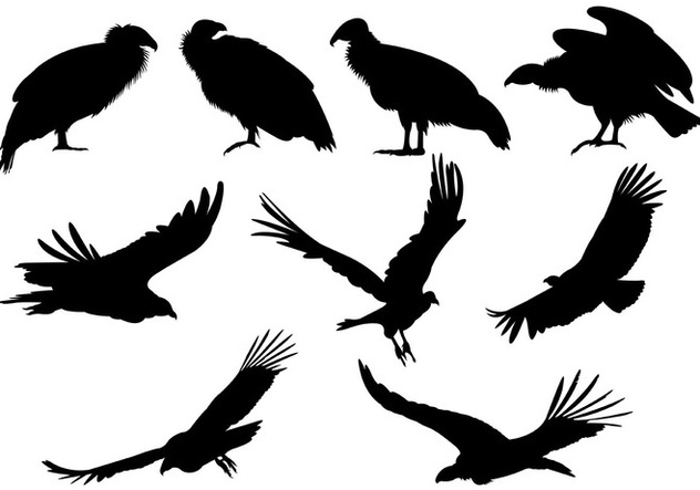 Set Of Condor Silhouettes - Free vector #399005