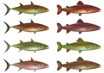 Vector Of Rainbow Trout - Free vector #399025