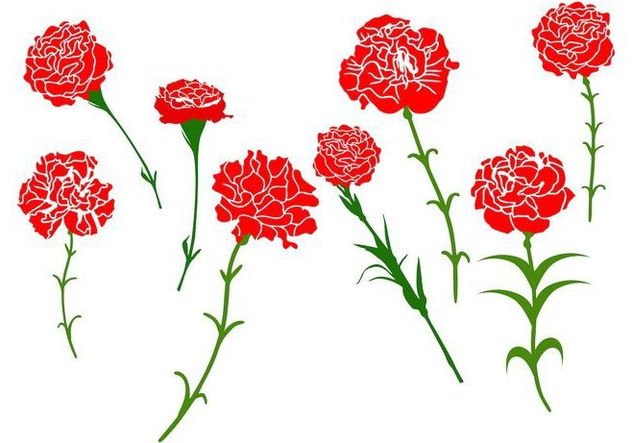 Free Carnation Flower Vector - Free vector #401205