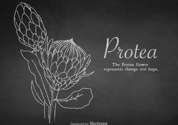 Free Chalk Drawn Protea Vector - vector gratuit #401995