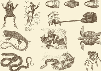 Sepia Reptile Illustrations - Free vector #403015