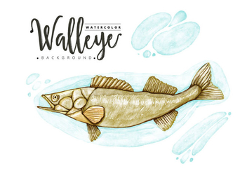 Free Walleye Background - vector #403605 gratis
