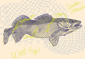 Free Walleye Vector Illustration - бесплатный vector #405395