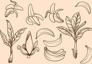 Free Hand Drawn Banana Tree Vector - бесплатный vector #406055