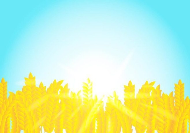Background On Rice Crop Flowers In The Sunshine - vector gratuit #406525