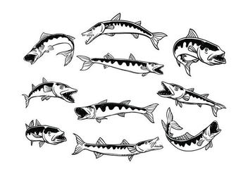 Free Barracuda Vector - Free vector #408675