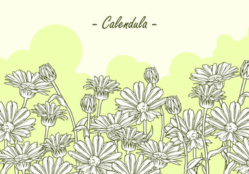Calendula Hand Drawing Free Vector - бесплатный vector #409825